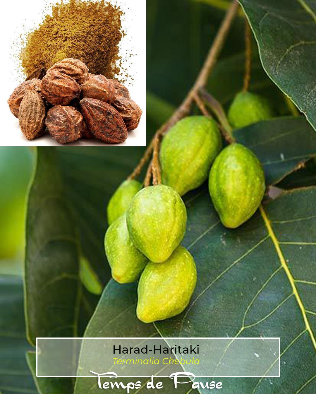 Harad-Haritaki -l'hérbier fabuleux de la couleur végétale naturelle chez Temps de Pause