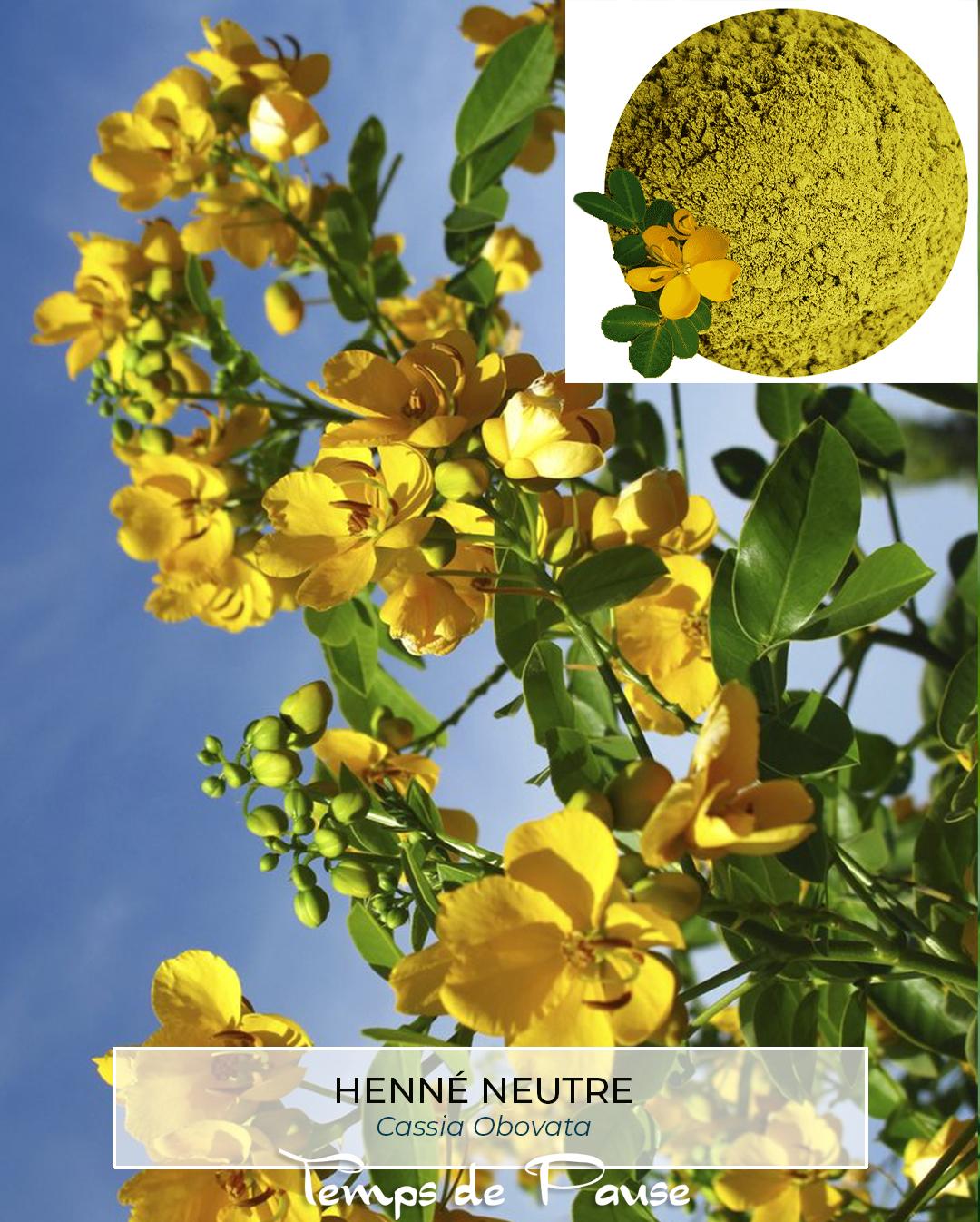 Henné neutre-Cassia Obovata